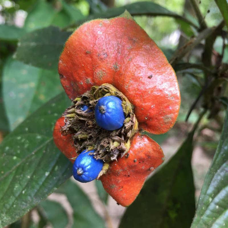 oct-30th-blog-blue-flower