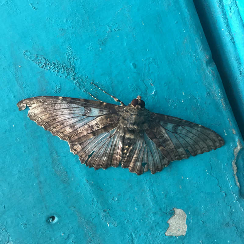 oct-30th-blog-moth